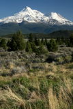 góry shasta Fotografia Royalty Free