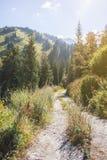 Góry sosny las w pogodnej pogodzie Podróż i przygoda w lecie lub jesieni wieczorem mgły nad narażenia haze kur długa górska woda  Zdjęcia Stock
