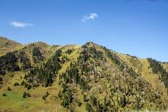 Góry sosny las w pogodnej pogodzie Podróż i przygoda w lecie lub jesieni wieczorem mgły nad narażenia haze kur długa górska woda  Obrazy Stock