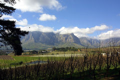 góry Stellenbosch Zdjęcie Royalty Free
