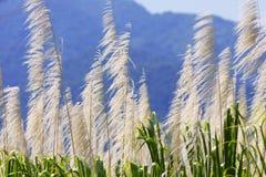 góry tła trzciny cukrowej Zdjęcie Stock