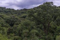 Góry w ameryka łacińska Obrazy Stock