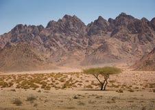 Góry w Synaj pustyni blisko sharm el sheikh, Zdjęcia Stock