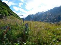 góry wysokogórskie kwiatu pole Szwajcaria, Unterstock, Urbachtal Fotografia Royalty Free