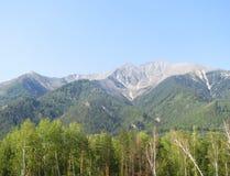 Góry z lasem Zdjęcia Stock