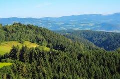 Góry z lasem w Austria Obrazy Stock