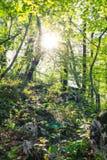 Góry zielony lasowy światło słoneczne przechodzi przez gałąź obrazy stock