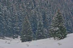 Góry zimy sosny las Obrazy Stock