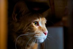 Gömd kattunge Arkivfoton