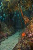 Gömd passage i brunalgskog Royaltyfri Bild