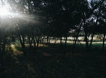 Gömd skog Royaltyfria Foton