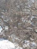 Gömd snöig trappuppgång arkivbilder