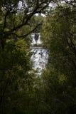 Gömd vattenfall i skog Royaltyfri Foto
