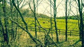 Gömda hästar Royaltyfri Foto