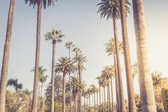 Gömma i handflatan av Beverly Hills fotografering för bildbyråer