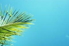 gömma i handflatan blå green för bakgrund skytreen Palmbladprydnad Turkos tonat foto Arkivbilder