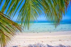Gömma i handflatan blad och det karibiska havet på en tropisk ö med den härliga stranden och sand arkivfoto