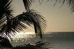 Gömma i handflatan blad på solnedgången royaltyfri fotografi
