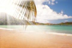 Gömma i handflatan den exotiska sandiga stranden för sommar med suddighet och havet på bakgrund Royaltyfri Bild