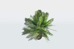 gömma i handflatan den små växten Arkivfoton