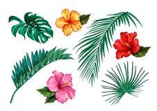 Gömma i handflatan den tropiska bladmonsteraen för vektor hibiskusuppsättningen stock illustrationer