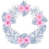 Gömma i handflatan den tropiska indigoblå blom- kransen för vattenfärgen med den rosa hibiskusfrangipanien och sidor av indigoblå Royaltyfri Foto