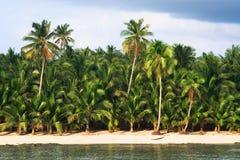 gömma i handflatan den tropiska paradistreen Arkivfoton