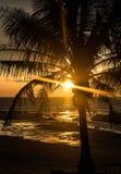 gömma i handflatan den tropiska solnedgångtreen Fotografering för Bildbyråer