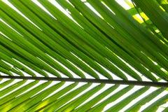 Gömma i handflatan det gröna bladet för bakgrund Arkivfoto