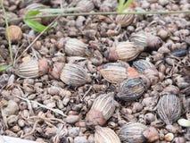 Gömma i handflatan frö på jordning som är full av svamp Arkivbilder
