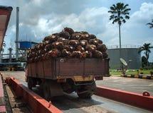 Gömma i handflatan frukt på lastbilen arkivfoto