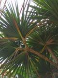 Gömma i handflatan härligt av fordifferent design för gröna tropiska sidor arkivbild