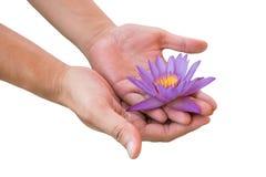 Gömma i handflatan hållande purpurfärgad lotusblomma för den unga mannen i hans med den snabba banan Arkivbilder
