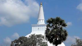 Gömma i handflatan högst och dyrbart socker för den vita stupaen banyanträdet royaltyfria bilder