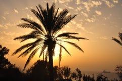 Palmträd på solnedgången som förbiser havet. Arkivbild