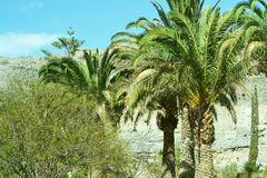 Gömma i handflatan i Las Palmas Arkivfoto