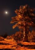 Gömma i handflatan i natten mot månen Arkivfoton