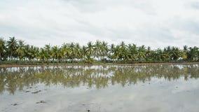 Gömma i handflatan kokospalmen lager videofilmer