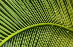 Gömma i handflatan leafen royaltyfri fotografi