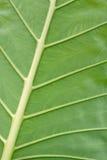 Gömma i handflatan leafen Arkivfoto