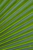 Gömma i handflatan leafen Royaltyfria Bilder