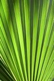 gömma i handflatan leafen för bilden för den blåa boken för albumbakgrund den paper fototexturtreen Arkivfoton