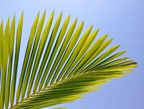 Gömma i handflatan leafen som visas mot ljust solljus Royaltyfri Bild