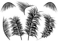 Gömma i handflatan leaves royaltyfri illustrationer