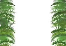 Gömma i handflatan mallen för bakgrund för växtträdsidor Exotiskt tropiskt kort för festivalselebrationhälsning Gömma i handflata stock illustrationer