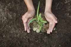 Gömma i handflatan med ett träd som växer från högen av mynt, händer som rymmer en tr fotografering för bildbyråer