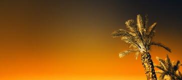 Gömma i handflatan med orange effekt för popkonst Tappning stiliserat foto med ljusa läckor Sommarpalmträd över himmel på strande arkivbilder