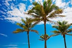 Gömma i handflatan mot blå himmel Fotografering för Bildbyråer