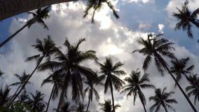 Gömma i handflatan mot blå himmel på den exotiska tropiska ön stock video