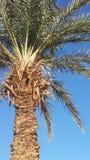 Gömma i handflatan oasen i Algeriet Royaltyfri Bild
